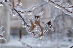 In belemmeringen van ijs Stock Foto