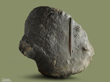 Belemnite - απολιθωμένο μαλάκιο Στοκ Εικόνες