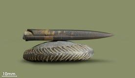 Belemnite - ископаемый clam Стоковые Фото