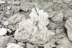 Belemnite fossils in chalk rock. quarry Royalty Free Stock Photography