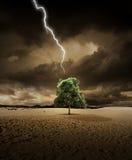 Beleuchten auf Wüstenbaum Stockbilder
