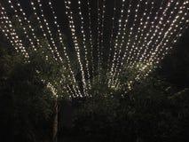 Beleuchten nachts über Bäumen Stockfotografie