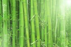Beleuchten Sie Bambus Lizenzfreie Stockbilder