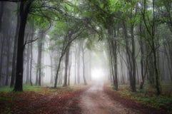 Beleuchten Sie am Ende einer Straße durch einen grünen Wald Stockbilder