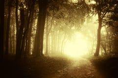 Beleuchten Sie am Ende eines Waldwegs im Herbst Stockfoto