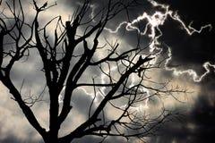 Beleuchtend und starb Baum Stockfotografie