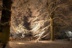 Beleuchteter Baum mit Schnee Lizenzfreies Stockbild
