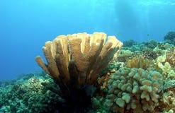 Beleuchteter korallenroter Kopf mit Boot im Hintergrund Lizenzfreie Stockbilder