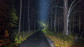 Beleuchteter Weg mit gefallenen Blättern nachts Stockfotos