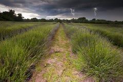 Beleuchtung flashs in den Sturmwolken über Lavendel Lizenzfreies Stockbild