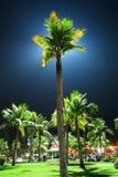 Beleuchtung-Palme nachts Stockbild