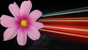 Beleuchtungsblume Stockfoto