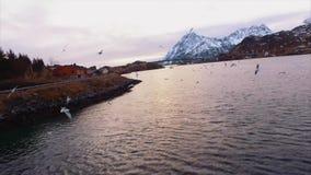 beleza aérea de 4K UHD da ilha de Lofaten vídeos de arquivo