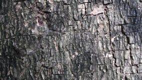 Beleza abstrata na natureza Sombra das folhas moventes na superfície da casca de árvore filme