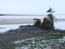 Beleza bonita da praia do Oceano Pacífico imagem de stock