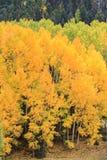 A beleza cênico do Colorado Rocky Mountains - Autumn Scene foto de stock royalty free