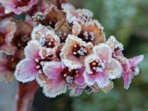 Beleza congelada Imagem de Stock Royalty Free