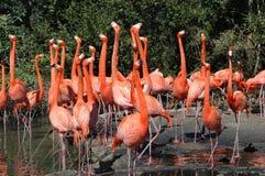 Beleza cor-de-rosa! Imagens de Stock Royalty Free