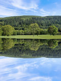 Beleza da árvore Foto de Stock Royalty Free