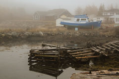 A beleza da baía da Terra Nova-lebre Fotografia de Stock
