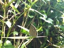 Beleza da borboleta fotografia de stock