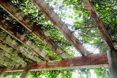 A beleza da estrutura do teto fotos de stock