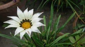 Beleza da flor Fotografia de Stock