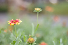 Beleza da flor alaranjada vermelha e vibrante Imagens de Stock