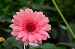 A beleza da flor imagem de stock royalty free