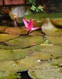 Beleza da lagoa Fotografia de Stock Royalty Free