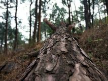 Beleza da natureza da árvore fotografia de stock royalty free