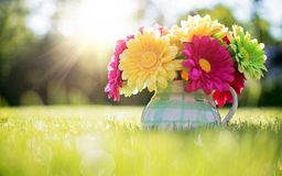 Beleza da natureza Imagem de Stock Royalty Free