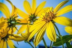 Beleza da natureza Fotos de Stock Royalty Free