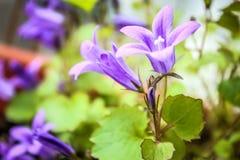 Beleza da natureza Fotografia de Stock