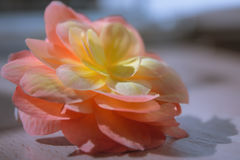 Beleza da natureza Foto de Stock
