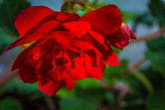 Beleza da natureza Imagem de Stock