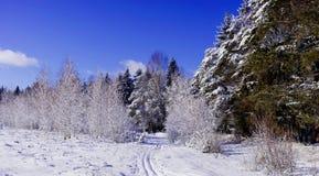 Beleza da natureza do inverno Fotos de Stock Royalty Free