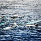 Beleza da natureza do mar Foto de Stock Royalty Free