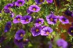 BELEZA DA NATUREZA EM KERALA Imagens de Stock