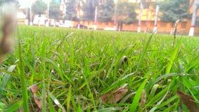 Beleza da natureza na manhã Imagem de Stock