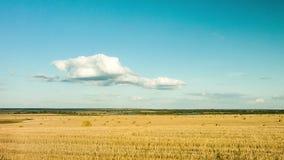 A beleza da natureza, um campo de trigo, feno, nuvens, timelapse video estoque