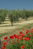 Beleza da paisagem mediterrânea Foto de Stock