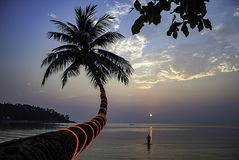 A beleza das árvores e dos turistas de coco que andam no mar durante o por do sol na praia da salada de Haad, koh Phangan em Sura imagem de stock royalty free
