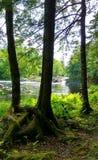 Beleza das cachoeiras através das árvores Imagens de Stock