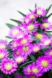 Beleza das flores Imagem de Stock Royalty Free