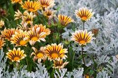 Beleza das flores Imagens de Stock