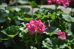 Beleza das flores frescas do fim do extremo da folha do verde da natureza acima Imagens de Stock