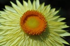 Beleza das flores frescas do fim do extremo da folha do verde da natureza acima Imagem de Stock Royalty Free