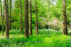 A beleza das florestas spruce fotografia de stock royalty free