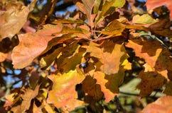 A beleza das folhas no outono fotos de stock